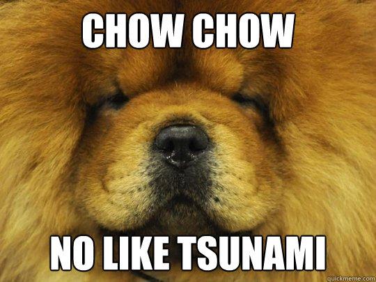 chow chow no like tsunami